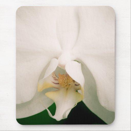 Orquídea blanca del Phalaenopsis Mousepad