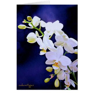 Orquídea blanca en tarjeta de cumpleaños del azul