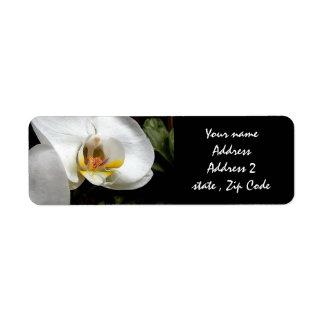 Orquídea blanca etiqueta de remitente