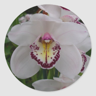 Orquídea blanca II Pegatina Redonda
