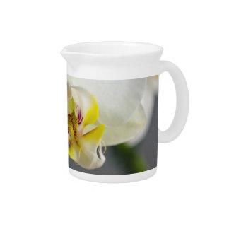 Orquídea blanca jarra de beber