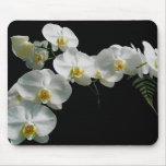 Orquídea blanca Mousepad Alfombrillas De Ratones