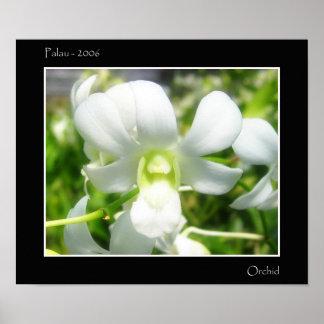 Orquídea blanca posters