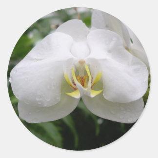 Orquídea blanca pegatina redonda