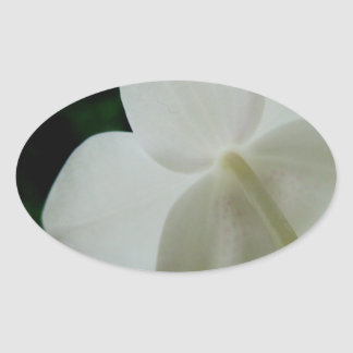 Orquídea blanca pegatina ovalada