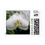 Orquídea blanca sellos