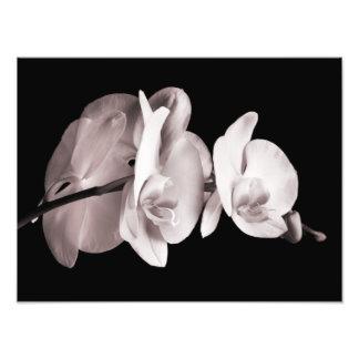 Orquídea blanca y poner crema de la sepia del fotografía