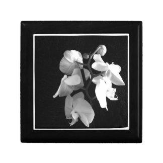 Orquídea Cajas De Regalo