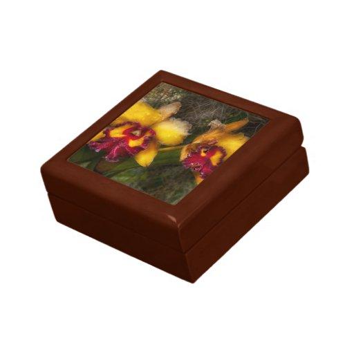 Orquídea - Cattleya - goteo con la pasión Caja De Recuerdo