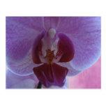 Orquídea coloreada añil tarjeta postal