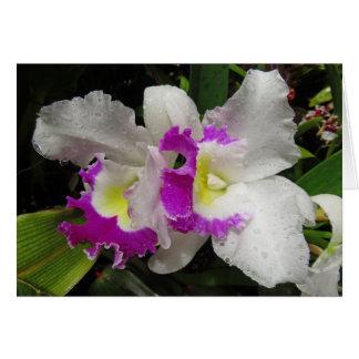 Orquídea de Cattleya Tarjeta De Felicitación