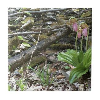 Orquídea de deslizador de señora rosada azulejo