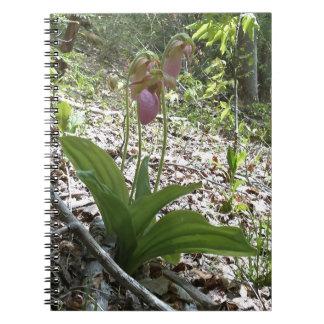 Orquídea de deslizador de señora rosada libretas