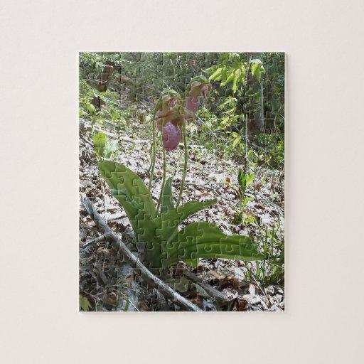 Orquídea de deslizador de señora rosada rompecabeza