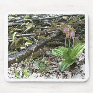 Orquídea de deslizador de señora rosada tapete de ratón