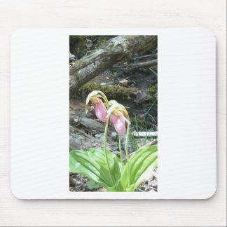 Orquídea de deslizador de señora rosada alfombrillas de ratón