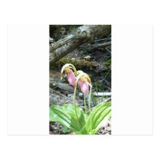 Orquídea de deslizador de señora rosada tarjetas postales
