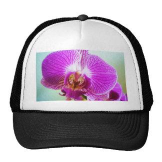 Orquídea de Fuschia Gorros