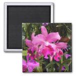 Orquídea de Fuschia Imán De Frigorífico