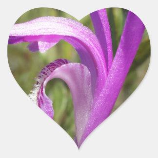 Orquídea de la boca del dragón (bulbosa de pegatina en forma de corazón