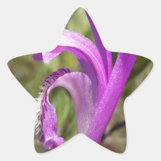 Orquídea de la boca del dragón (bulbosa de pegatina en forma de estrella
