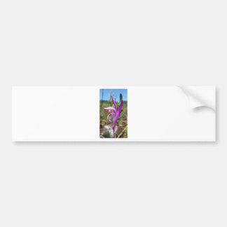 Orquídea de la boca del dragón (bulbosa de pegatina para auto