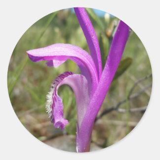 Orquídea de la boca del dragón (bulbosa de pegatina redonda