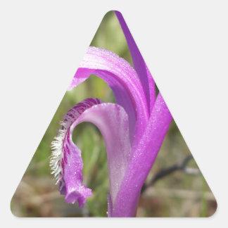 Orquídea de la boca del dragón (bulbosa de pegatina triangular