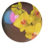 Orquídea de la noche platos de comidas