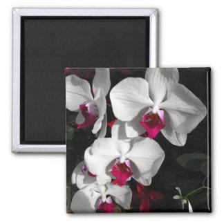 Orquídea de la reina imán para frigorifico
