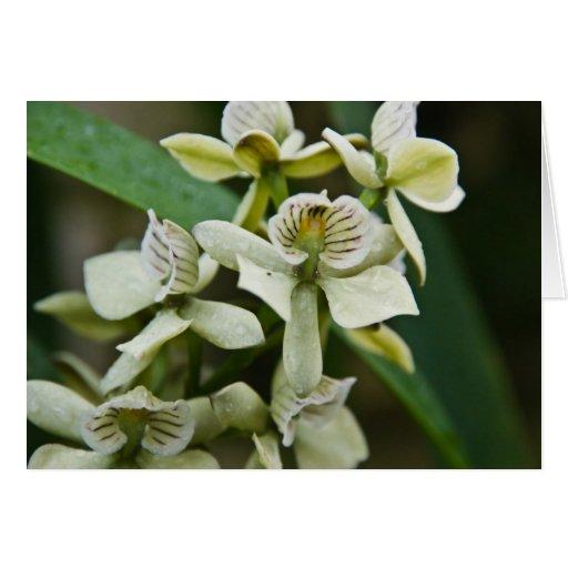 Orquídea de Livida del Encyclia Tarjeta De Felicitación