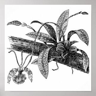 Orquídea de mariposa póster
