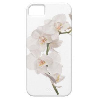 Orquídea de polilla blanca iPhone 5 fundas