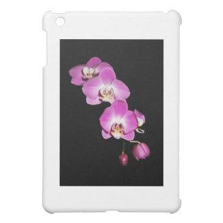 Orquídea de polilla de conexión en cascada