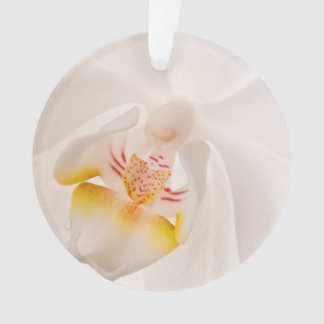 Orquídea de polilla del Phalaenopsis