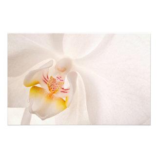 Orquídea de polilla del Phalaenopsis Fotografía