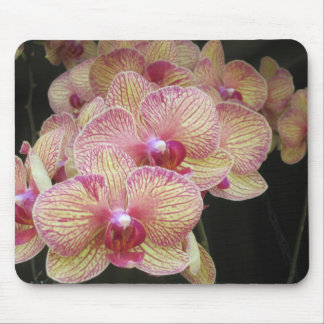 Orquídea de polilla rosada y amarilla Mousepad Alfombrillas De Raton