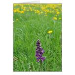 Orquídea de púrpura temprana tarjeta