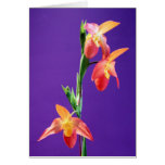 Orquídea de señora deslizador tarjeta de felicitación