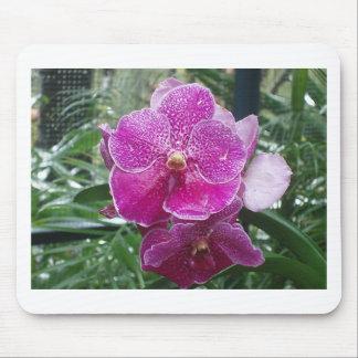 Orquídea de Singapur Mouse Pads