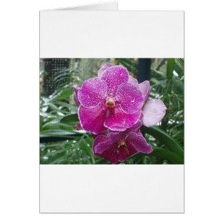 Orquídea de Singapur Tarjeta De Felicitación