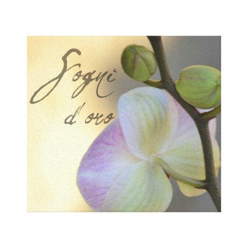 Orquídea de Sogni D'oro (sueños dulces) Lona Envuelta Para Galerías