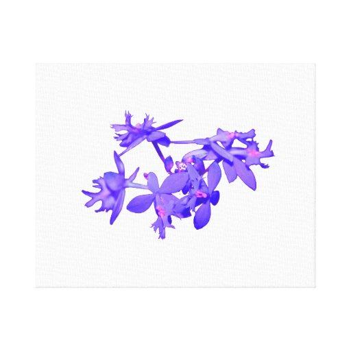 Orquídea de tierra teñida azul de las flores impresión en lienzo