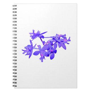 Orquídea de tierra teñida azul de las flores libreta