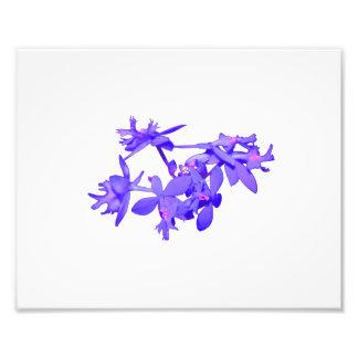 Orquídea de tierra teñida azul de las flores foto
