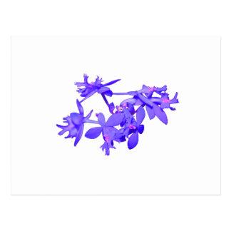 Orquídea de tierra teñida azul de las flores postales