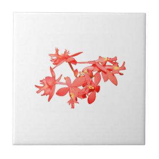 Orquídea de tierra teñida salmones de las flores azulejo cuadrado pequeño
