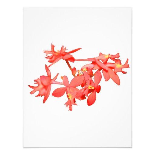 Orquídea de tierra teñida salmones de las flores invitacion personal