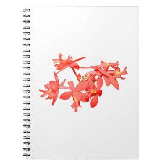 Orquídea de tierra teñida salmones de las flores cuadernos