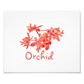 Orquídea de tierra teñida salmones del texto de la impresión fotográfica